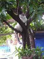Minimo en la pasarela del árbol