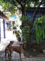 Las perras abajo y el Mínimo en el del árbol