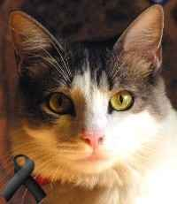 Mínimo, el gato