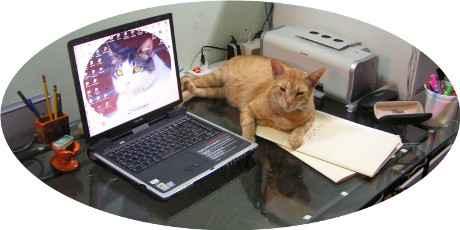 gato cuidando laptop