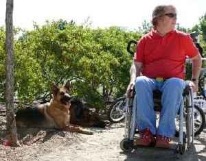 hombre en silla de ruedas y sus perros