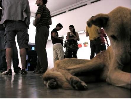 perro amarrado muriendo