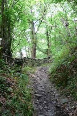 Camino de montaña entre castaños