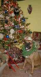 Arbol navideño y perro