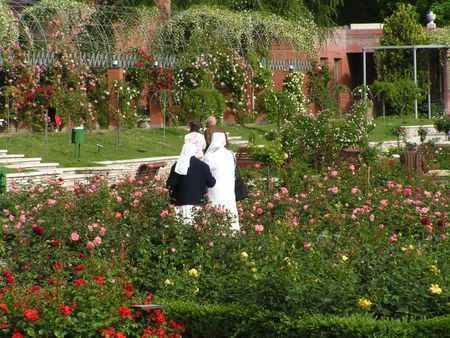 La rosaleda del Parque del Oeste, Madrid