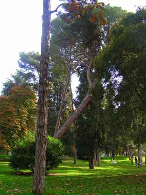 pino inclinado