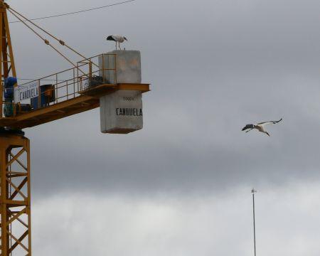 Cigüeñas en torre