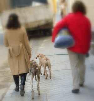 paseando a los perros