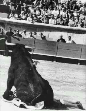 toro en el ruedo