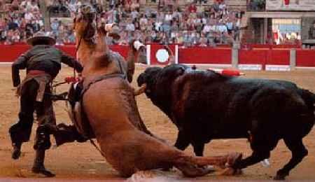 toro pitoneando caballo