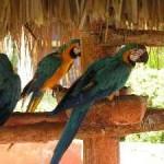 Otro viaje a la Isla de Margarita