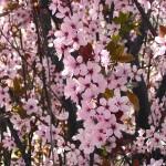Primavera en flor.