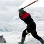 Matanzas de focas