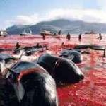 Caza de ballenas y diplomacia