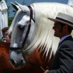 Fantásticos caballos de pura raza española