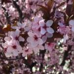 Mi arrepentimiento anual de primavera